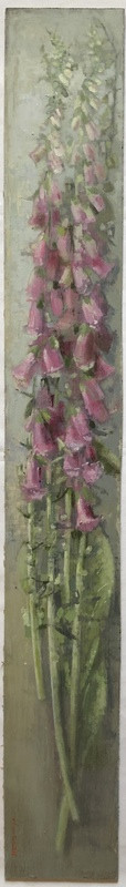 'Long Foxglove Study' by Andrew Douglas-Forbes